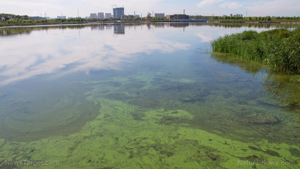 Community in Virginia seeks water pollution resolution from mega